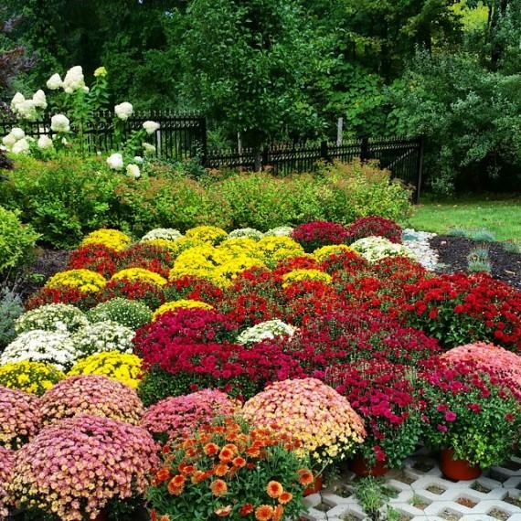 Fall Plantings 2
